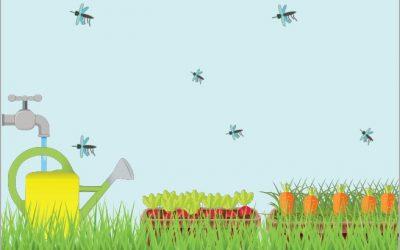 24 mai – Réunion publique à Villeneuve – Moustiques : comment limiter les nuisances