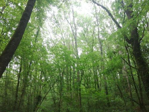 CCAS - Sortie forêt de Bouconne 06 07 2021